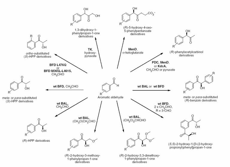 inbesondere die vielfalt der thdp katalysierten enzymatischen reaktionen ist beeindruckend abbildung 4 - Beispiele Fur Chemische Reaktionen
